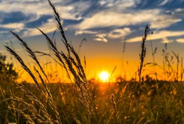 Utjecaj vremena, klime i klimatskih promjena na poljoprivrednu proizvodnju