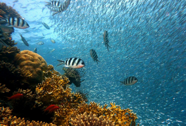 Utjecaj klimatskih promjena na oceane, mora i njihovu obnovu