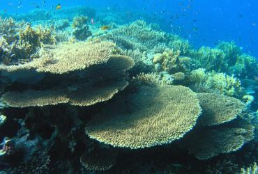 Umjetnim oblacima protiv pregrijavanja koraljnih grebena