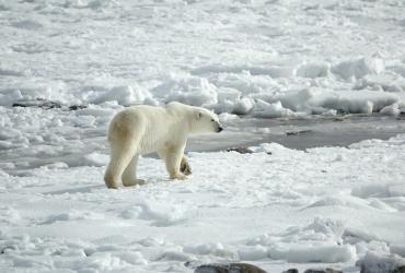 Prilagodba životinjskog svijeta klimatskim promjenama