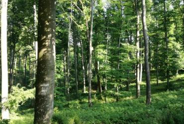 Prilagodba šuma i šumarstva klimatskim promjenama